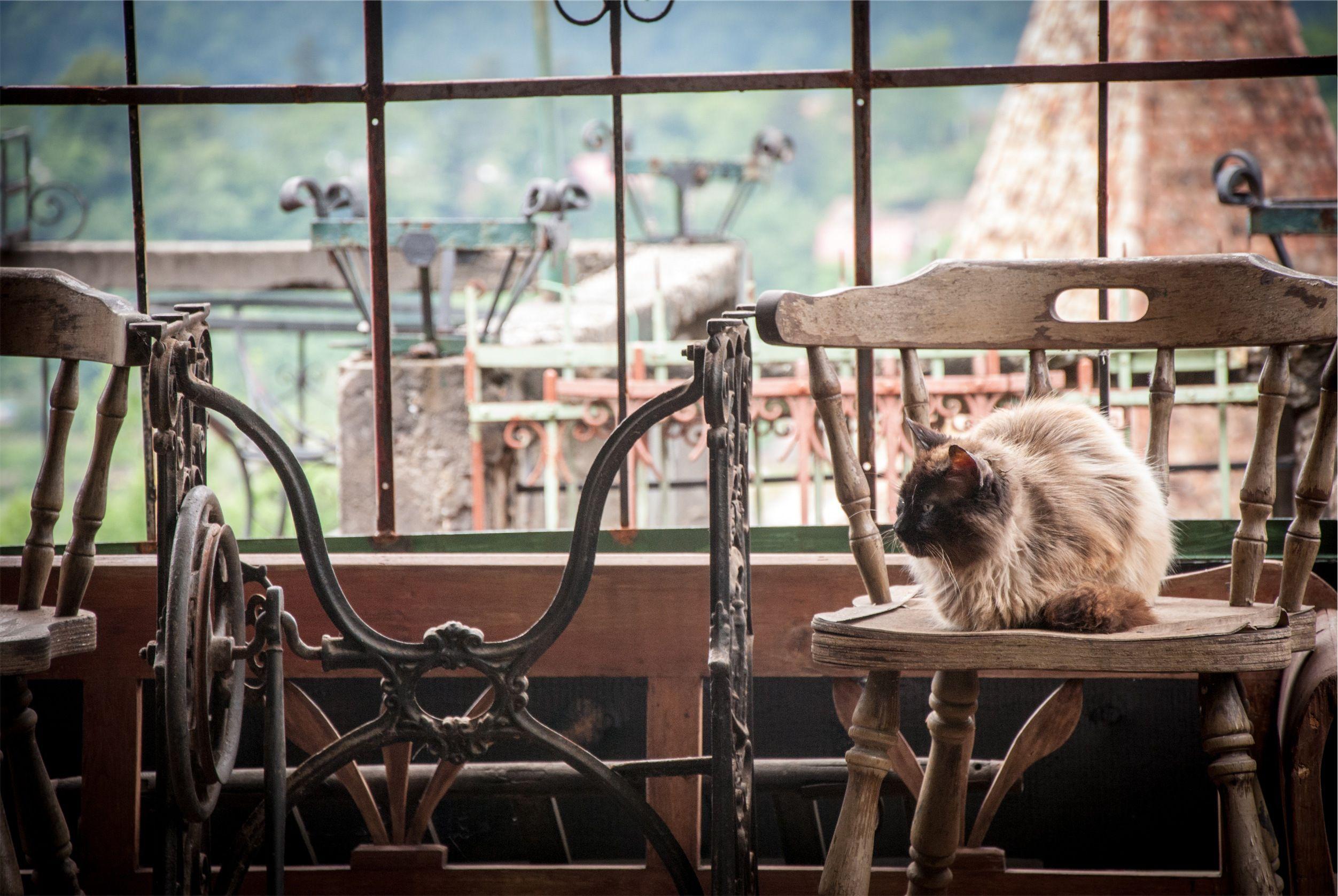 Cat Cafe Pets Cats Cat Cafe Happy Cat