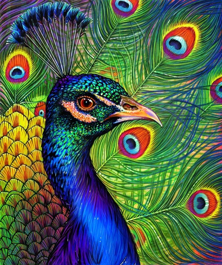 Peacock Drawing , an art print by Morgan Davidson