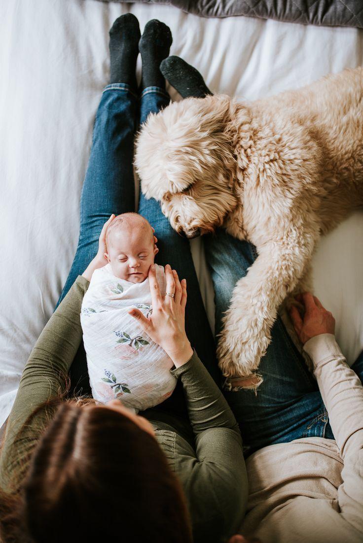 Neugeborenen-Sitzung zu Hause. Lifestyle Neugeborenen-Sitzung. Hund und Baby. Se...