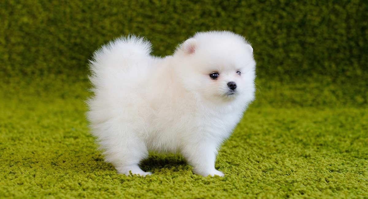 Name A Cuter Dog Aww Cute Animals Cats Dogs Hunderassen Hunde Rassen Hunde