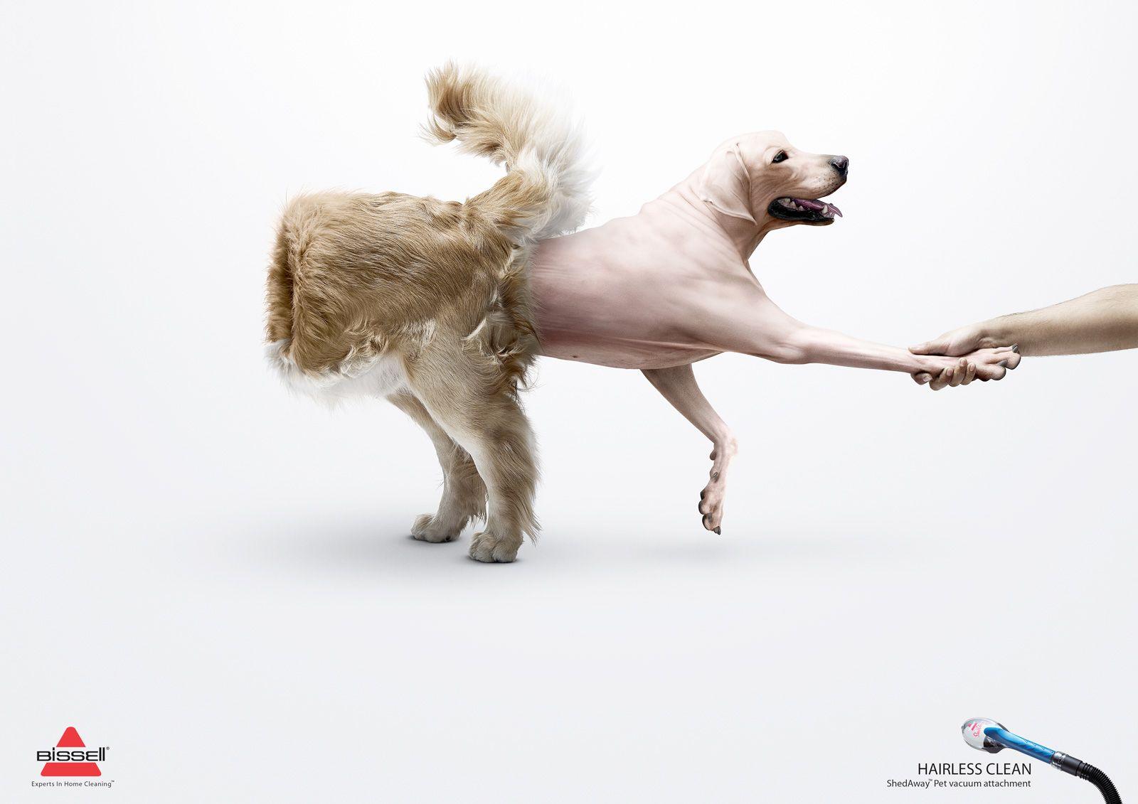 Cachorro avesso