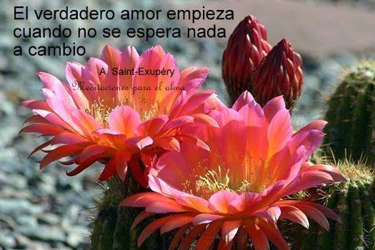 El verdadero amor es cuando no se espera nada a cambio.