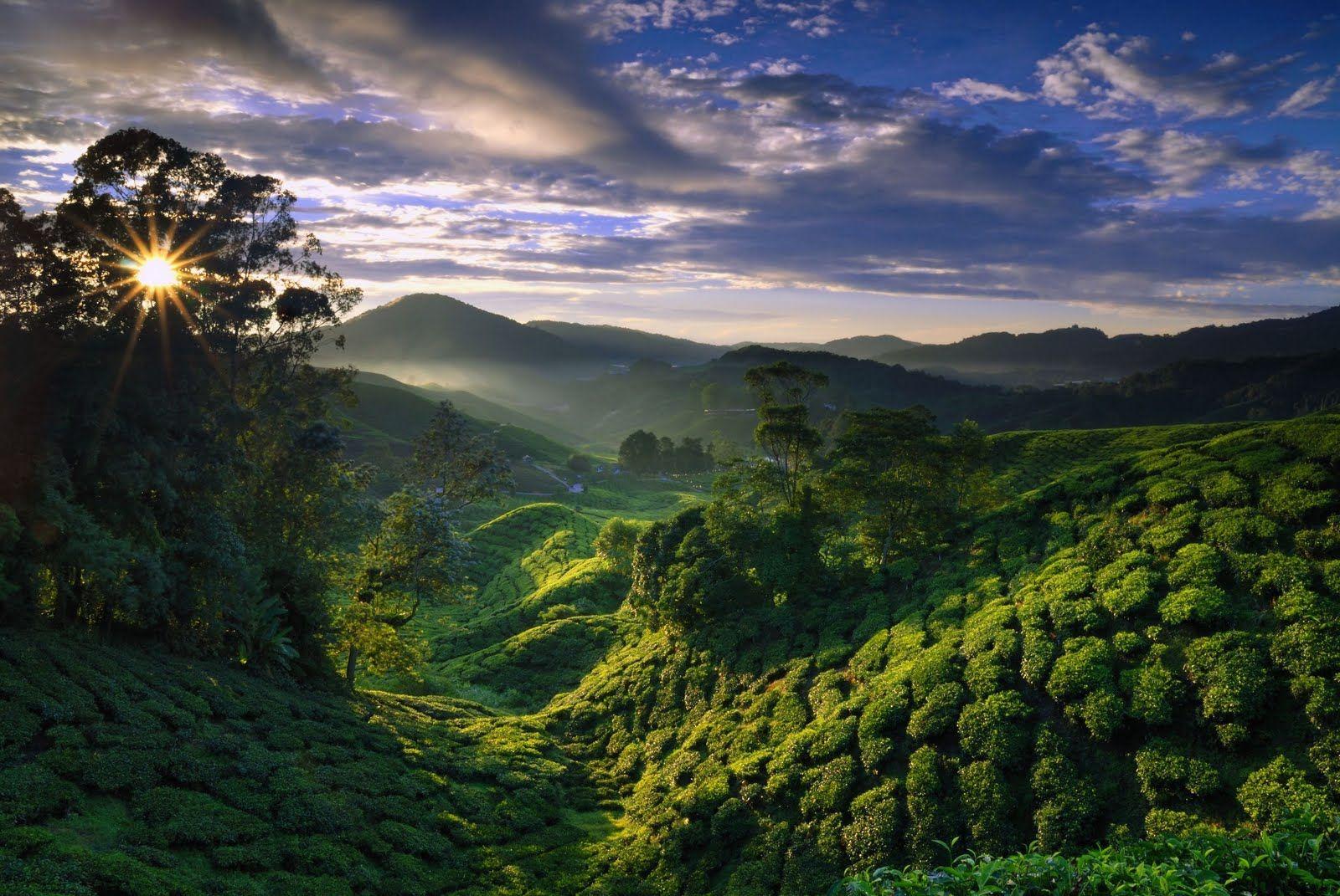 Our newest tea education endeavor The World of Fine Teas