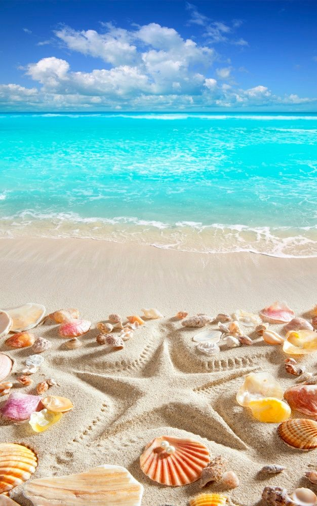 Beach Sand Starfish Print Caribbean Tropical Sea