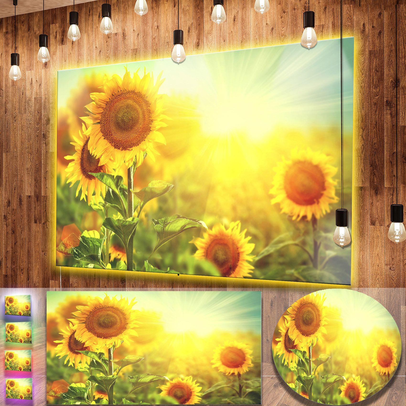 Designart 'Sunflowers blooming on the field' Animal Metal Wall Art Print