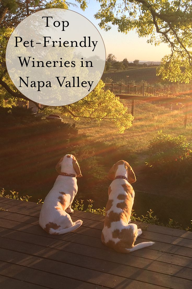 Napa Valley Woofers Top Pet Friendly Wineries