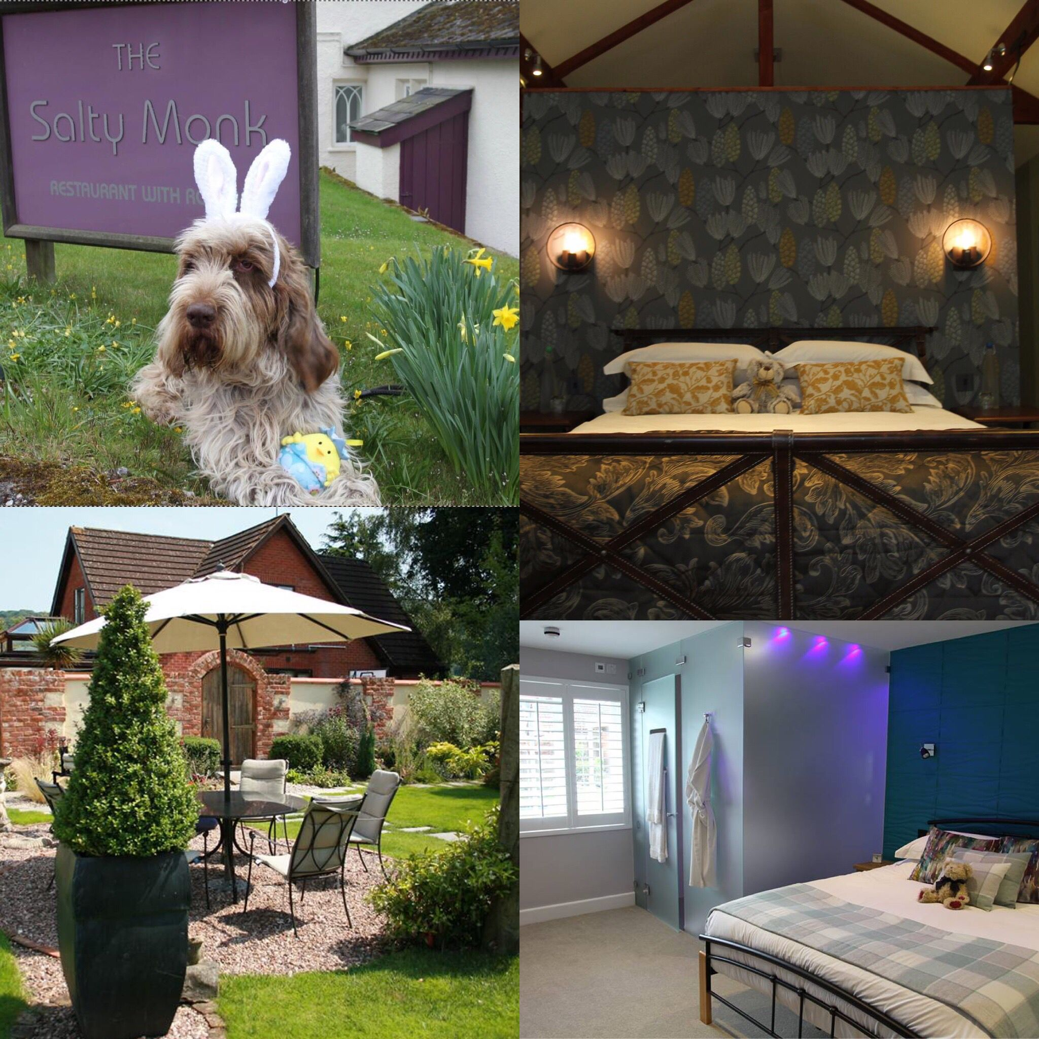 Dog Friendly The Salty Monk Bed and Breakfast Sidmouth