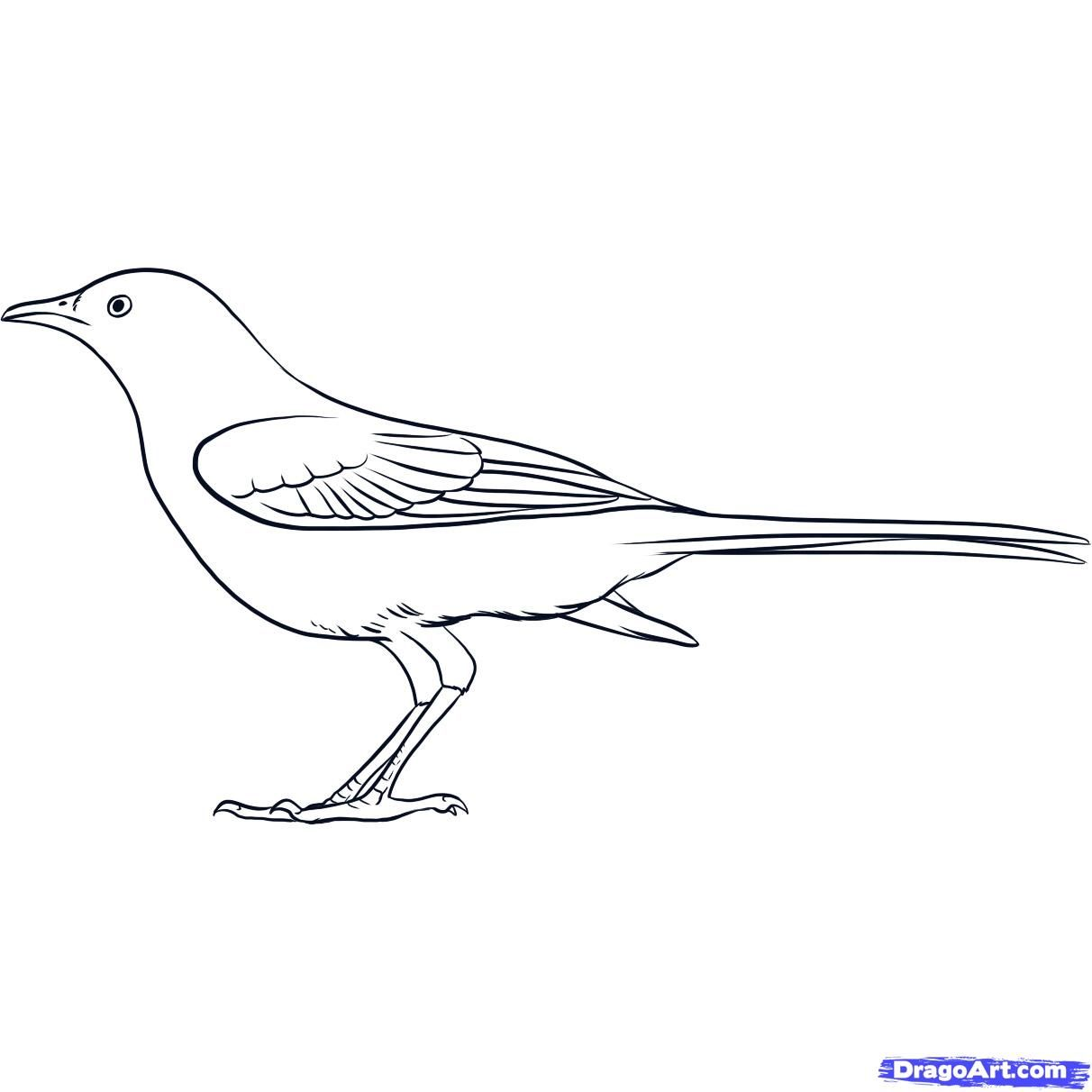 How To Draw A Mockingbird By Dawn Drawings Animal Drawings