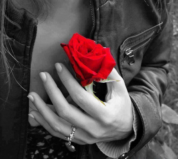 Não sei decifrar o amor : Só sinto! Fátima Rodrigues