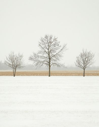 Colour photograph of three trees in a snowy park with a