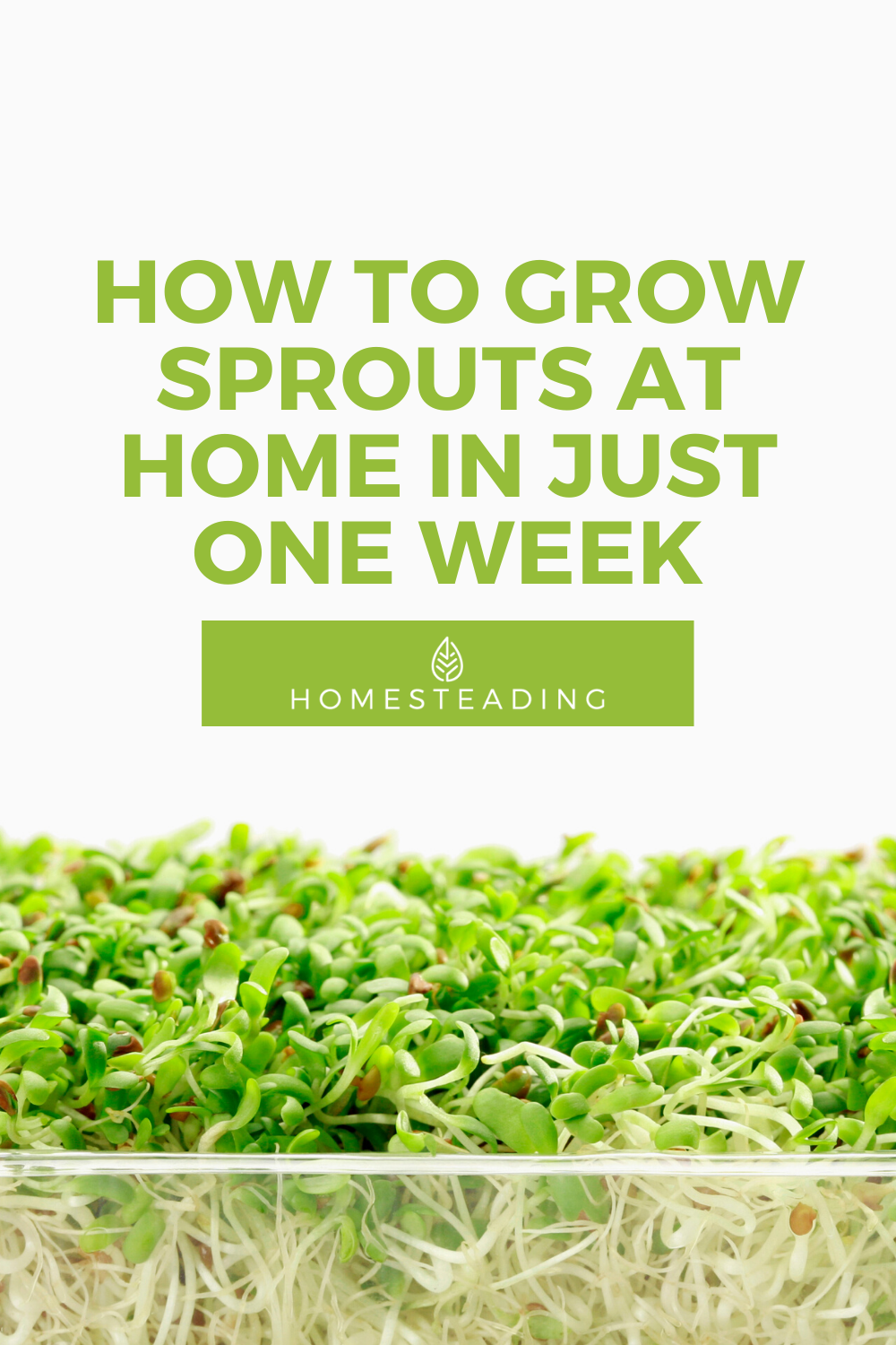 How To Grow Sprouts At Home In Just 1 Week Homesteading In 2021 Growing Sprouts Sprouts Growing