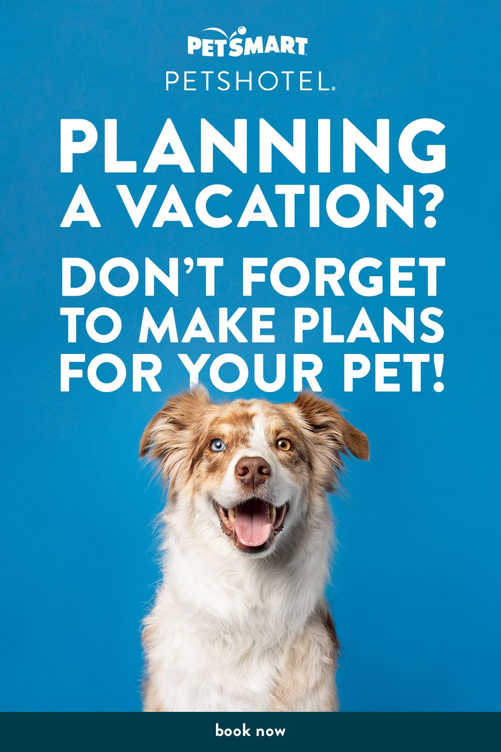 Full Service Hotel With 24 7 On Site Care An On Call Vet Dogs Can Enjoy Playtime Salon Services All Inclusive Packages Person Dog Solution Pets Baby Dogs