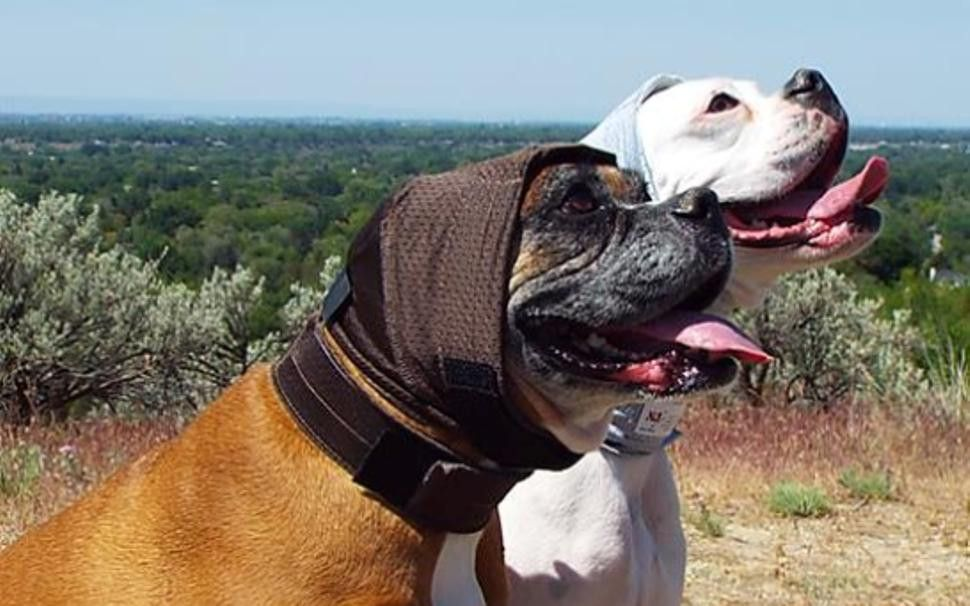 A Protective Ear Wrap For Dogs To Protect Dog S Ears And Help Them