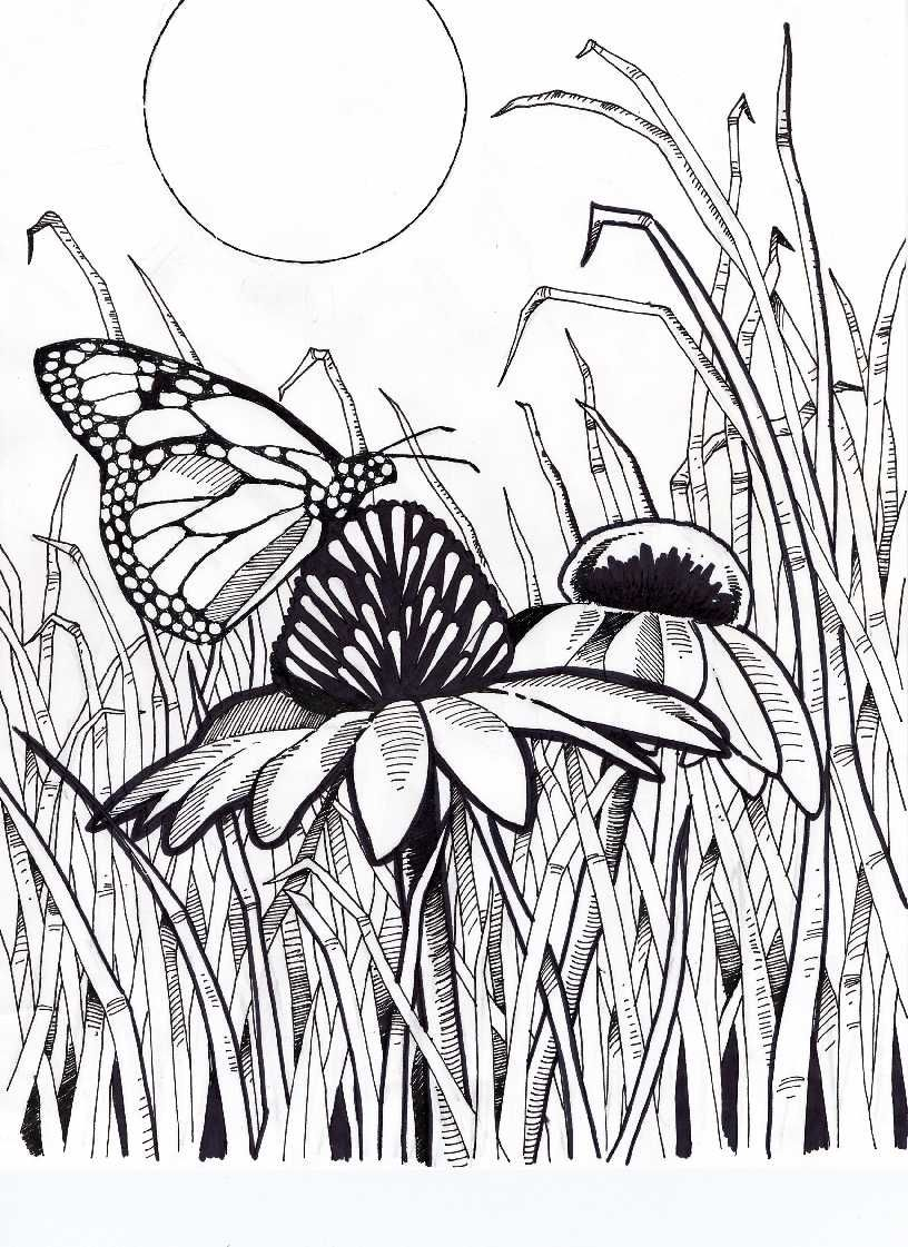 Coloring pages grass - Difficult Coloring Pages For Adults Butterfly On Coneflower With Grass And Sun