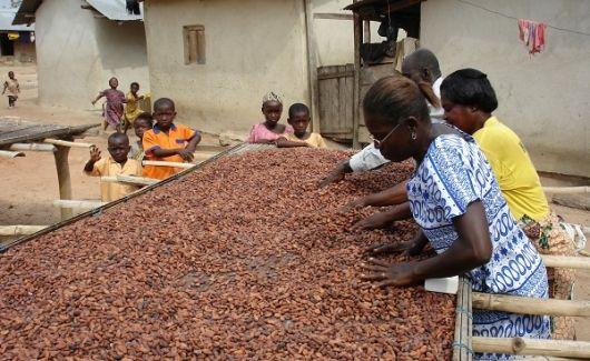 Dissertation ghana kuapa kokoo day chocolate