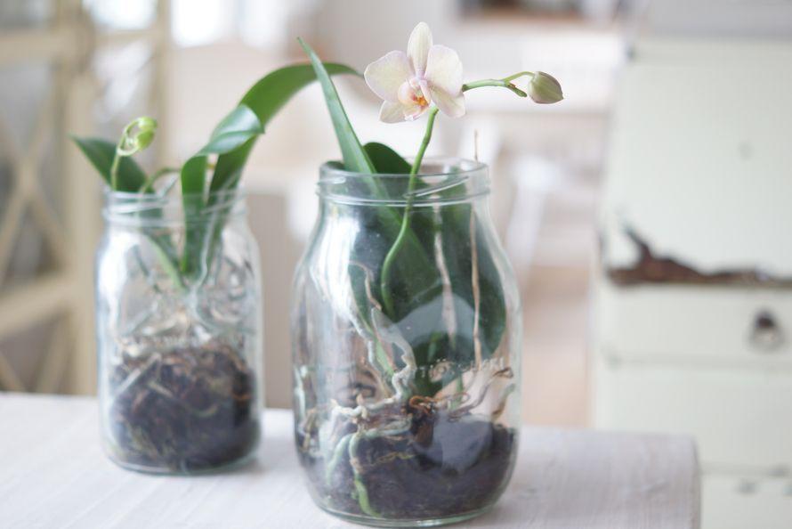 Kodin Kuvalehti – Blogit | Ruususuu ja Huvikumpu – Orkideat viihtyy vanhoissa karhutölkeissä
