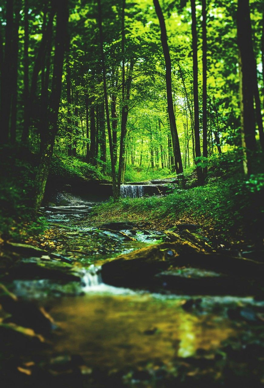 Cool Forest Green Nature Peaceful Beautiful Nature Scenes Nature Nature Photos