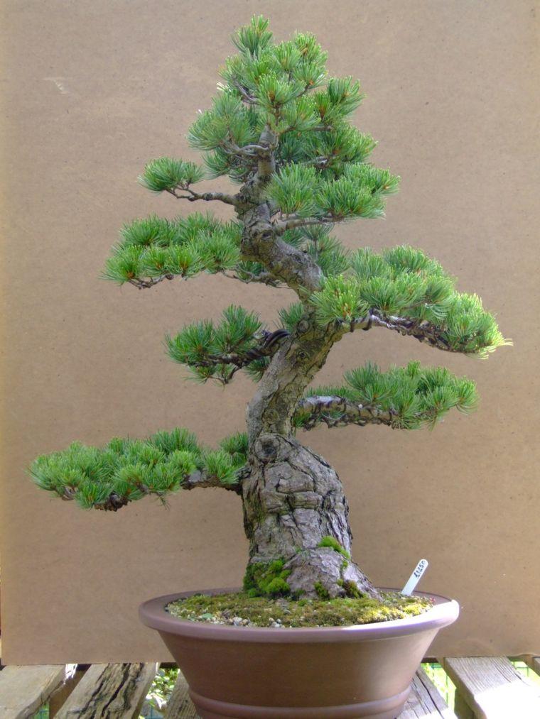 Jardines verticales Diy con suculentas - consejos y sugerencias - #bonsaiplants