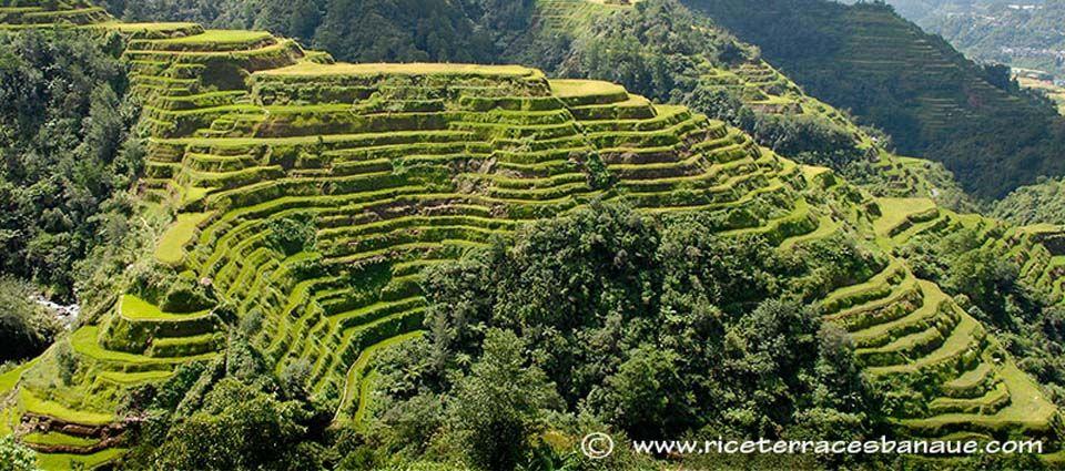 Banaue Rice Terraces Philippines Trip Must Do Asap Pinterest Terrace Banaue Rice Terraces
