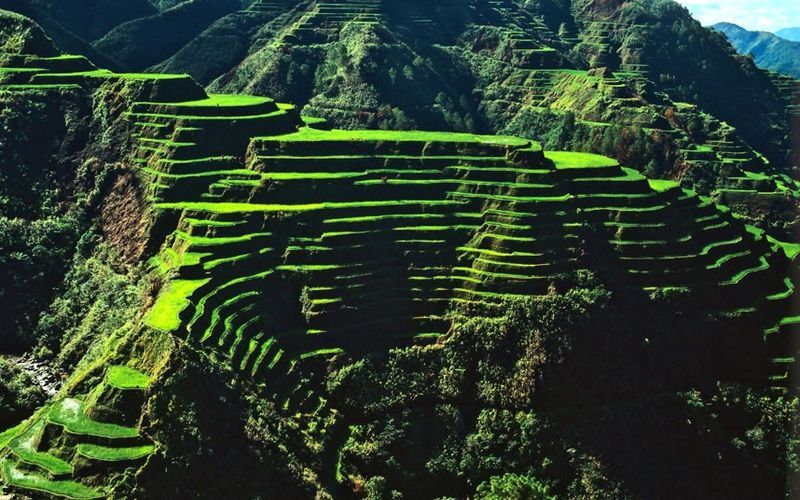 Ifugao/Igorot used terrace farming in the steep mountainous regions of northern Philippines over 2000 years ago: Banaue Rice Terraces