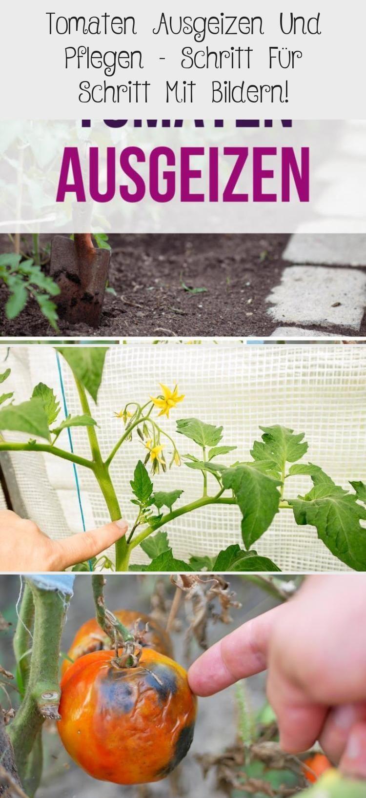 Hochbeet Ideen Einfach In 2020 Tomaten Pflanzen Hochbeet Tomaten