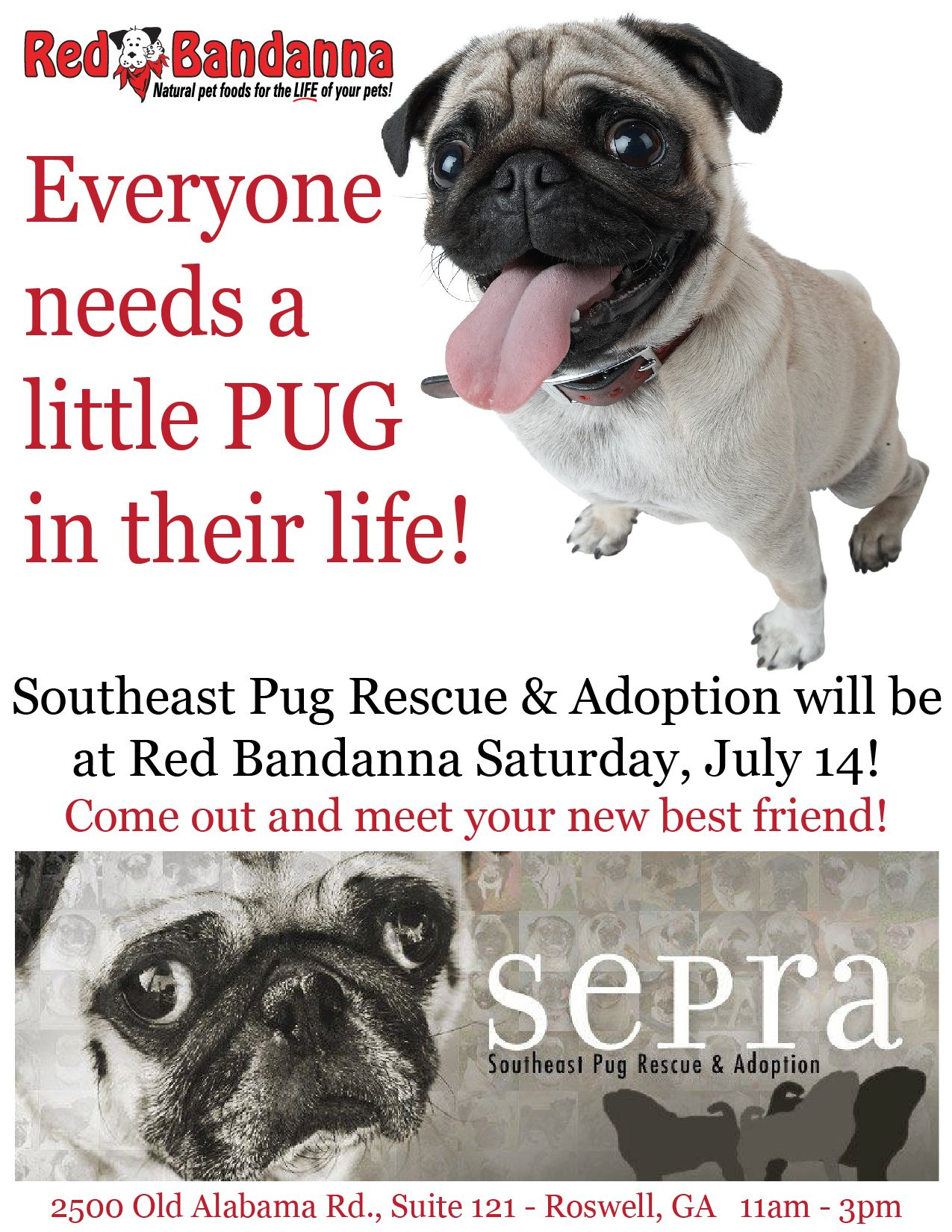 Southeast Pug Rescue Adoption Will Be At Red Bandanna Saturday