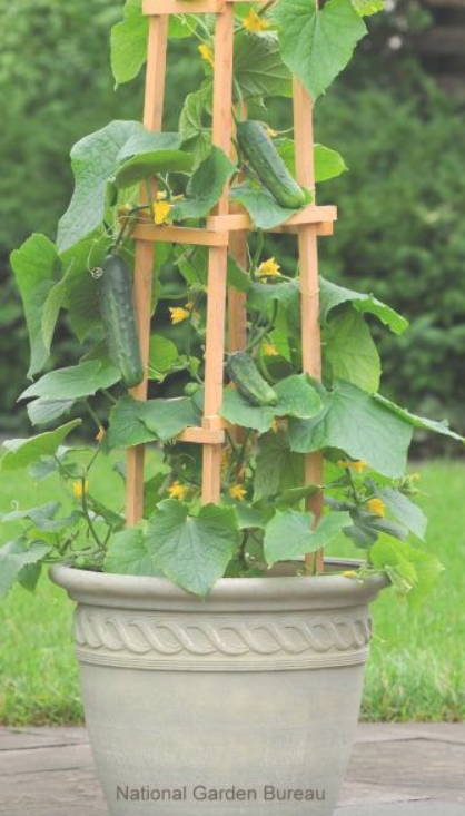 Container gardening is an easy way to grow vegetables especially when you lack  Container gardening is an easy way to grow vegetables especially when you lack  Diy Abschn...