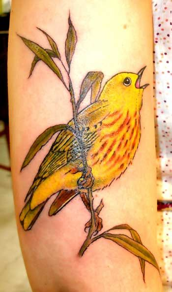 Pin By Becky Miller On Tattoos Yellow Bird Tattoo Realistic Bird Tattoo Bird Tattoo Neck