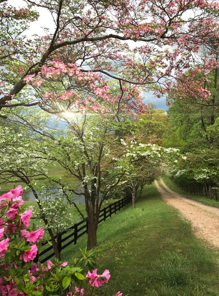 Pin By Love Life With Lucy On Flowers Gardens Spring Landscape Photography Spring Scenery Spring Landscape