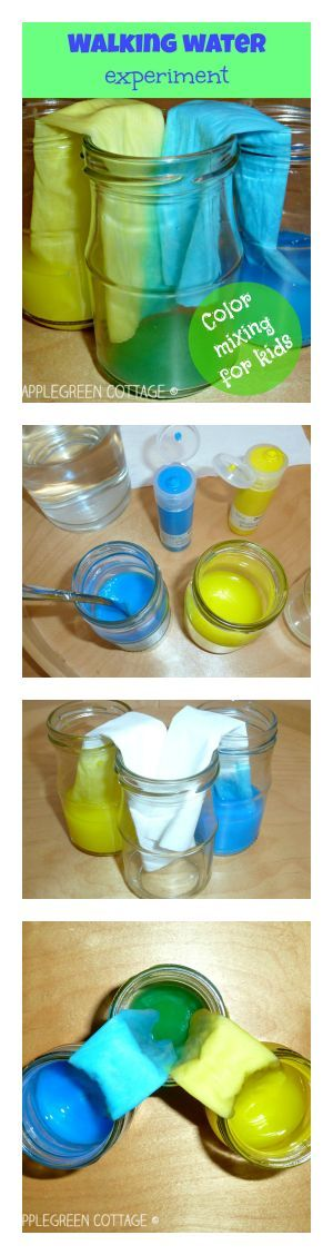 Walking water experiment for kids. A fun, easy and colorful learning activity for kids to try out!