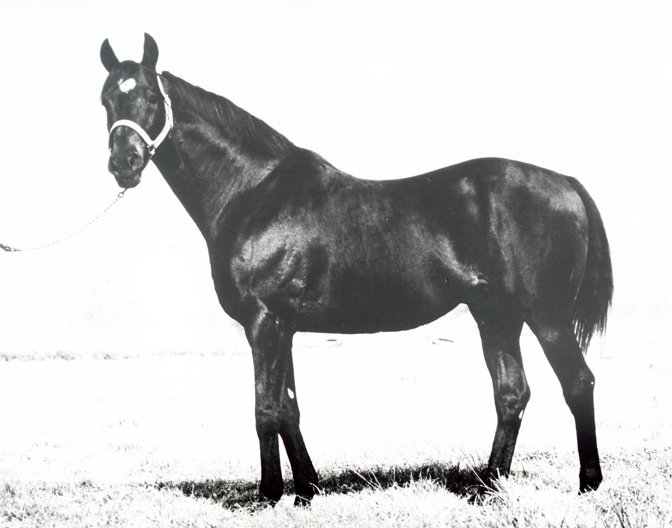 Moon Deck S Family Is One Of The Fastest Families Of Quarter Horses To Breeze Into The Record Books Aqha Horses Quarter Horse Stallion American Quarter Horse