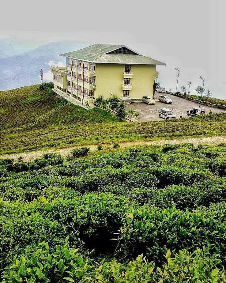 Temi tea garden, Namchi, Sikkim, May 2017 PC - Kinkini Chatterjee #india #bharat #nature #sikkim #hindustan #tea