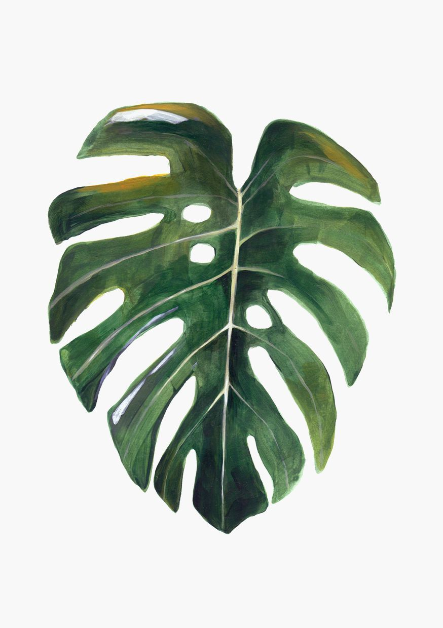 Hoja Monstera A4 via Hermano Gato. Click on the image to see more ...