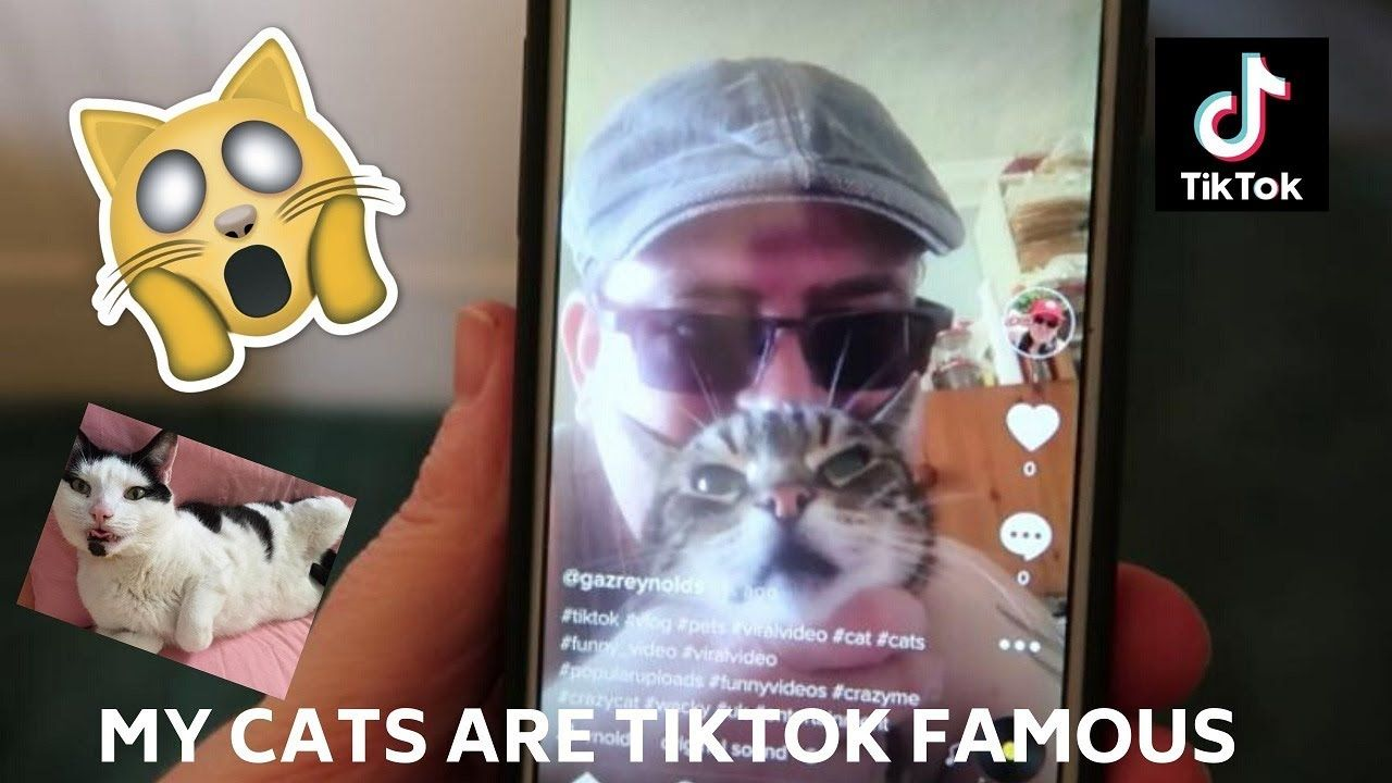 My Cats Became Tiktok Famous Viral In 24 Hours Best Memes Ever Best Memes Cats