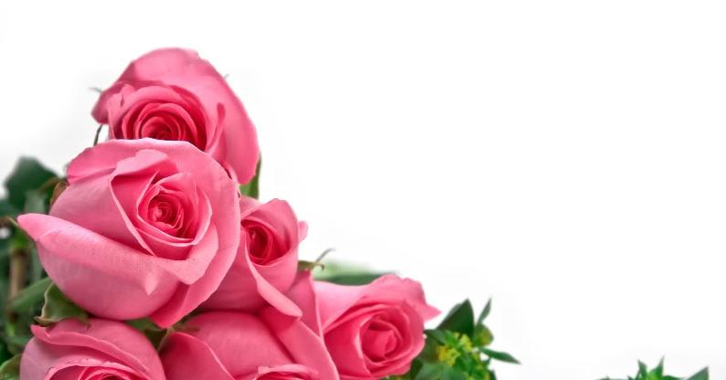 احسن الصور يمكن الكتابه عليها بطاقات فارغة للكتابة عليها خلفيات فارغة للكتابة عليها اشكال جميلة للكتاب Rose Flower Wallpaper Pink Rose Bouquet Flower Wallpaper
