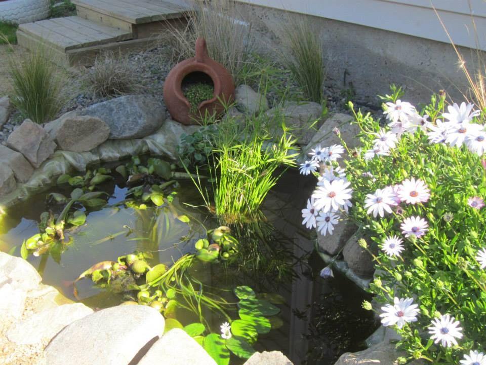 Peque o estanque tortugarios en casa pinterest for Estanque jardin pequeno