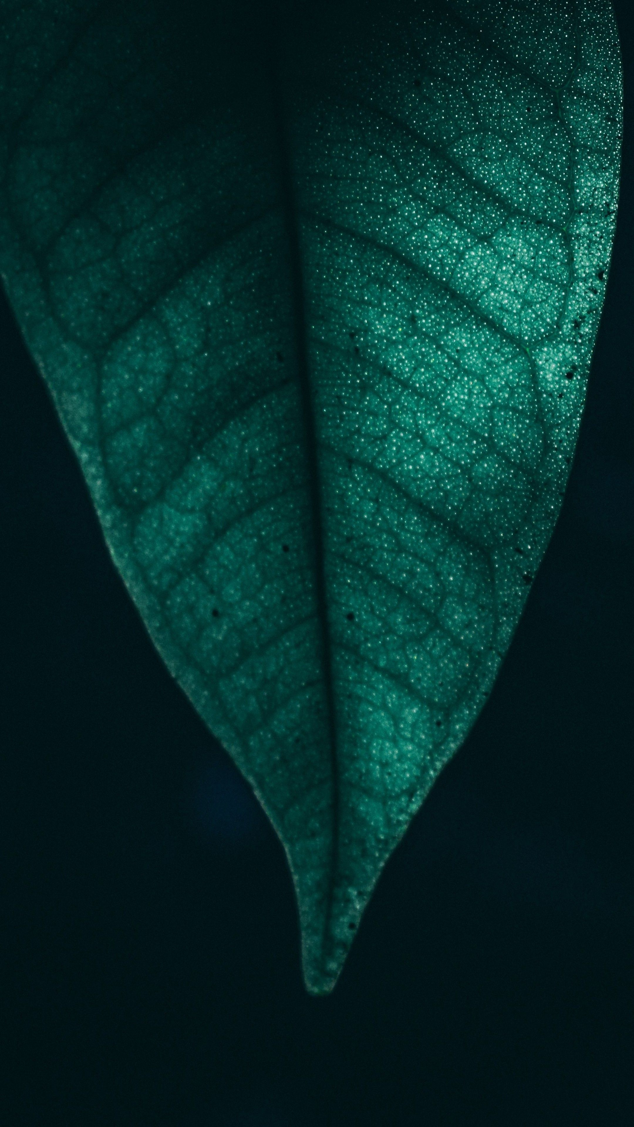 Nature Green Leaf Macro 4k Wallpapers Hd 4k Background For Android Wa Whatsapp Wallpaper 4k Wallpaper Android Fondos De Pantallla