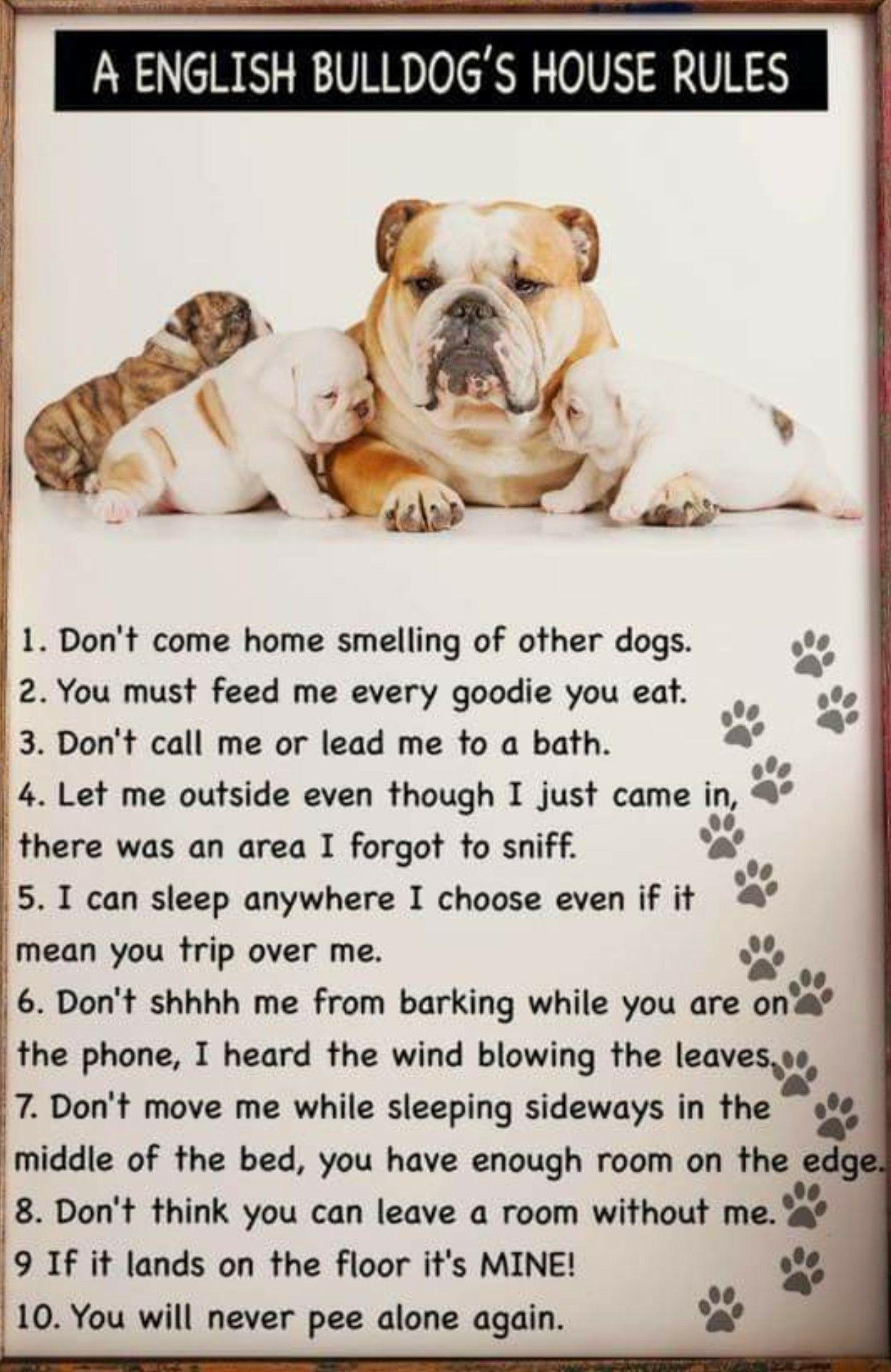Rules D English Bulldog Funny Bulldog Funny English Bulldog Lover