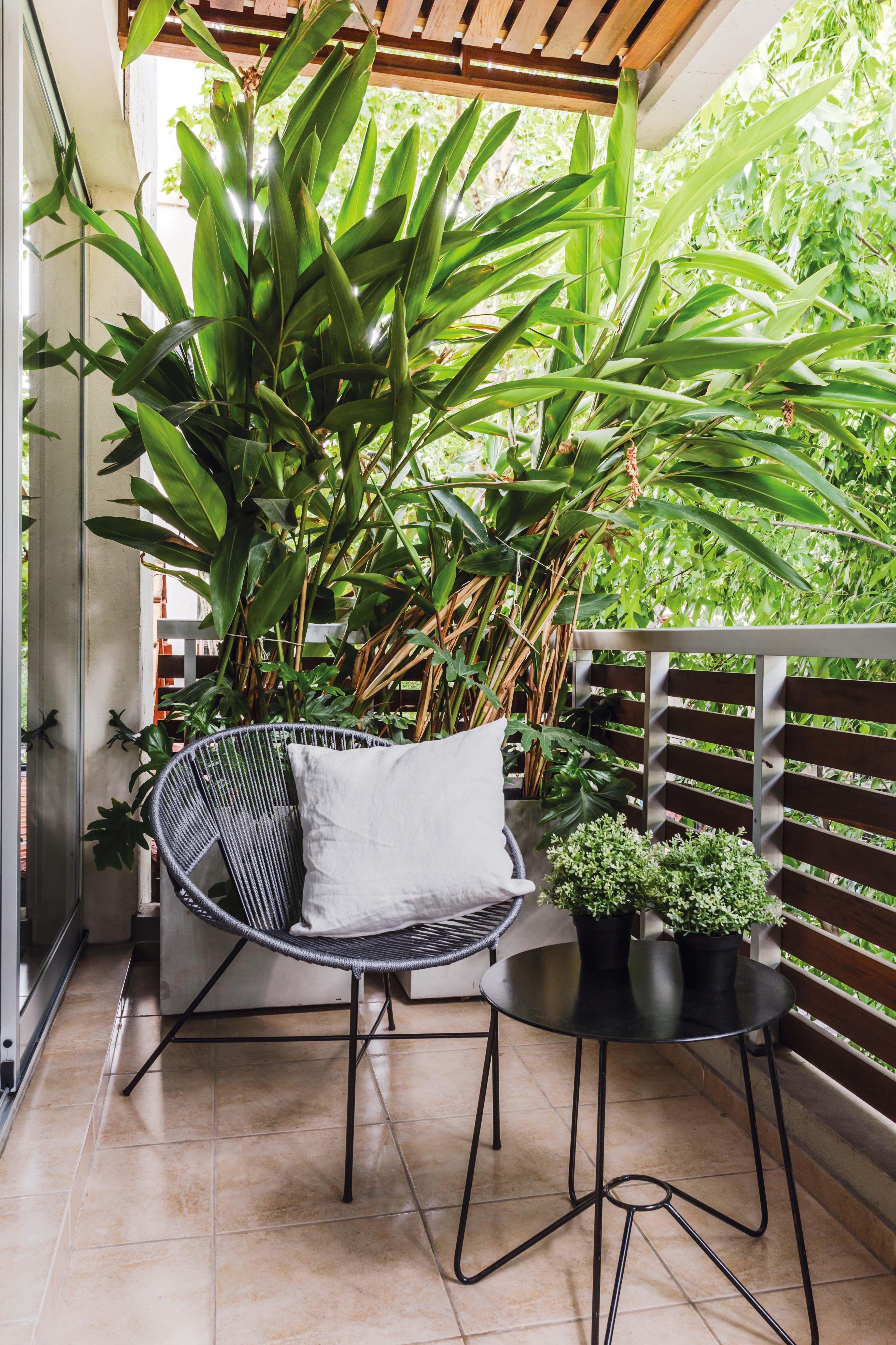 Balcon Corrido Con Gran Macetero Y Planta Con Onda Tropical