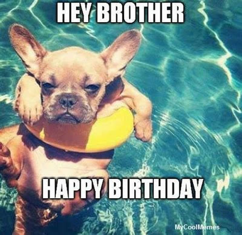 101 Funny Happy Birthday Dog Memes For Paw Lovers Everywhere Happy Birthday Dog Happy Birthday Funny Dog Happy Birthday Animals