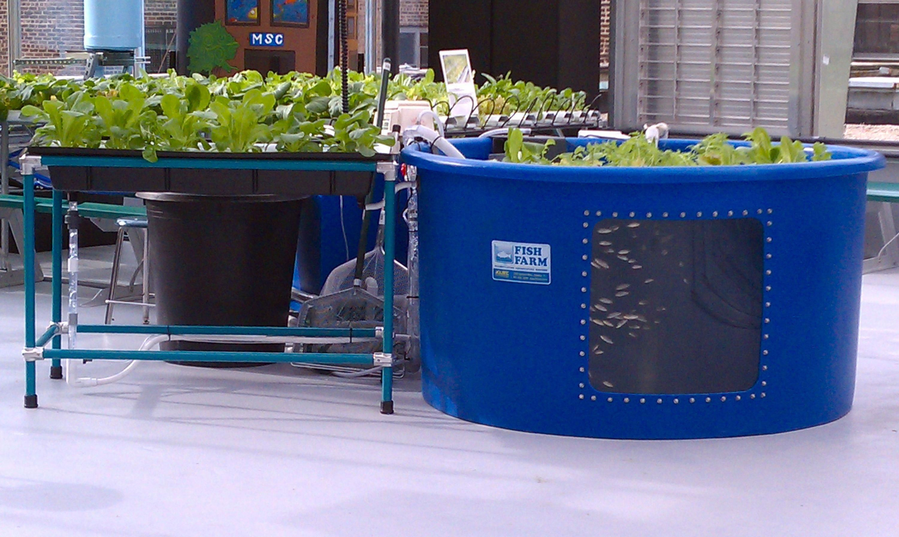 small resolution of dutch bucket aquaponics google search verticalaquaponicssystem