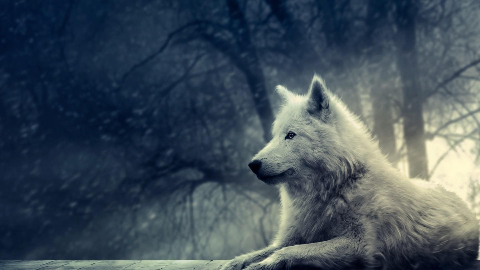 10 New Cool Wolf Desktop Backgrounds Full Hd 1080p For Pc Background In 2020 Wolf Wallpaper Wolf Lone Wolf