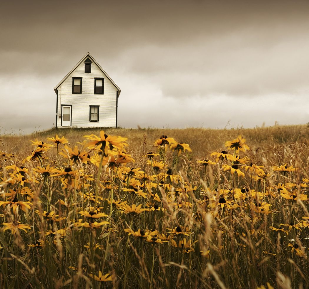 house in a field of flowers