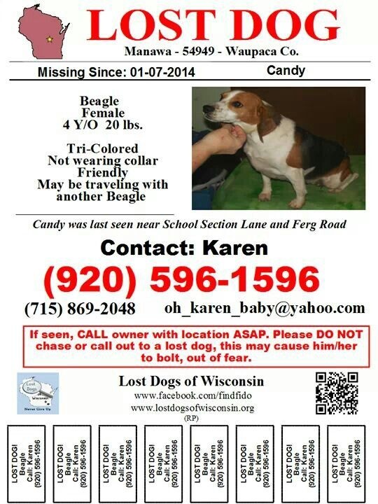 Missing Lost Pet Beagle Dog Named Candy In Wisconsin Losing