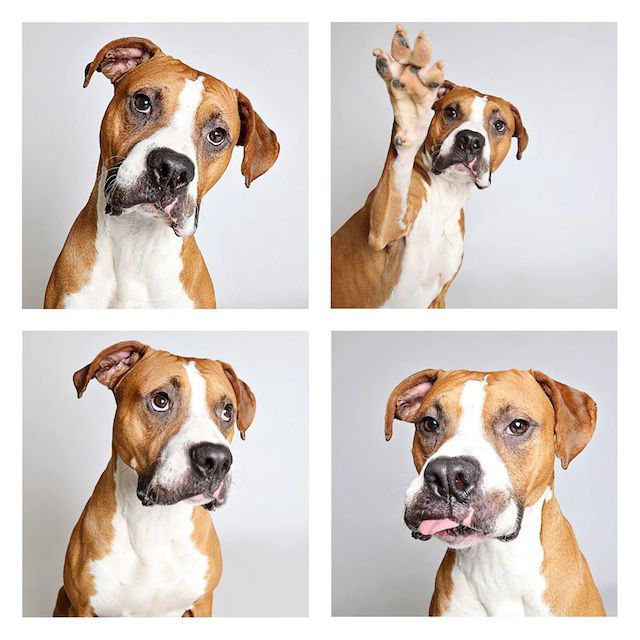 Photo Booth Pictures Help Shelter Dogs Find New Homes Shelter Dog Photography Animal Photography Dog Photography