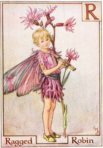 Ragged Robin Fairy from the Flower Fairy Alphabet by Cicely Mary Barker ❤❦♪♫