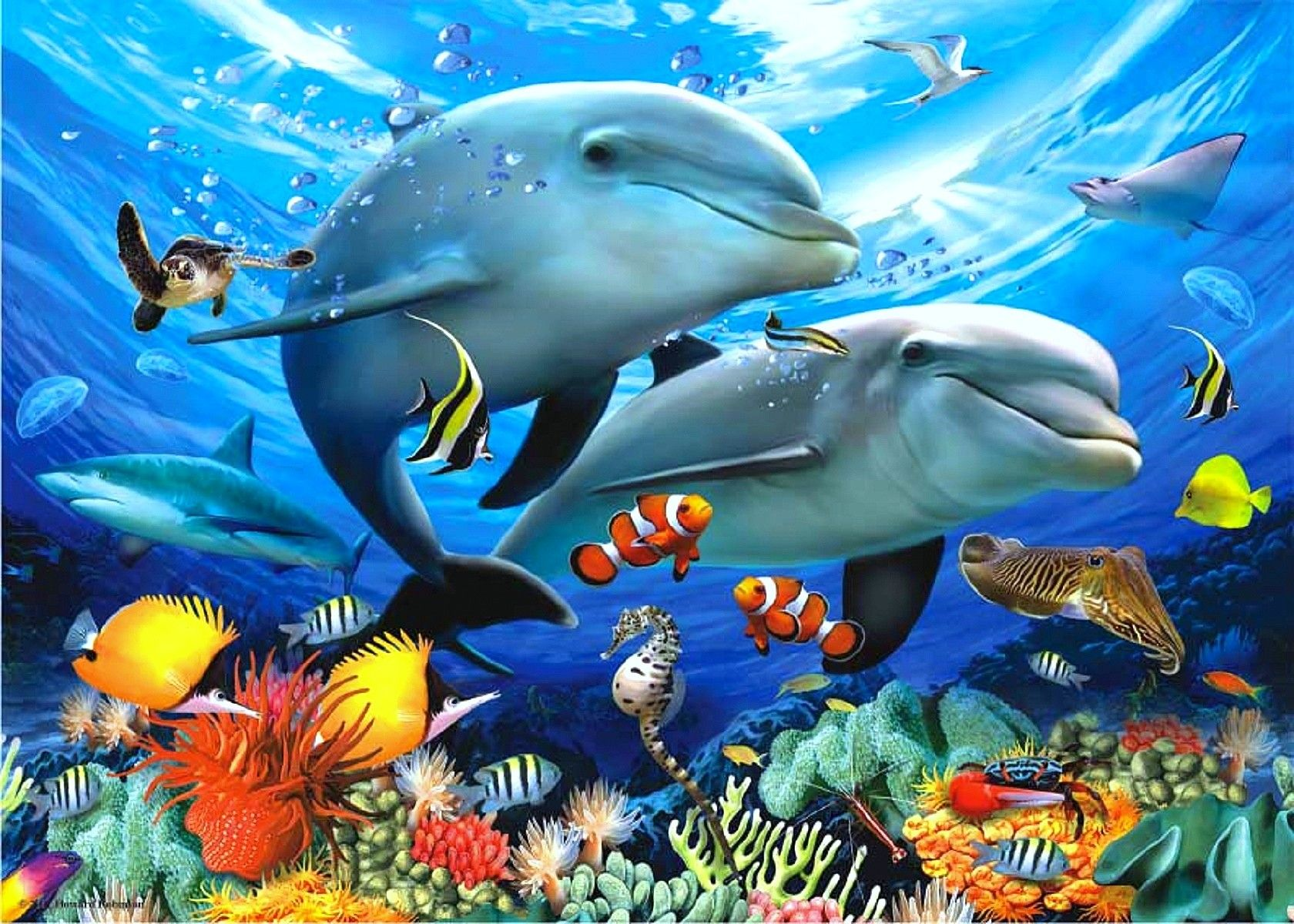 Dolphins wallpapers high definition wallpapers cool nature - Oceans Sea Starfish Ocean Nature Urchins Orange Hd Wallpapers