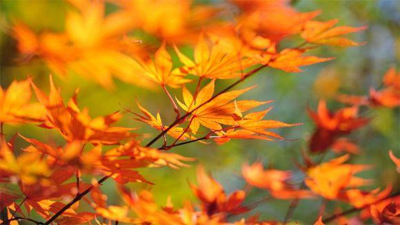 30 Colorful Autumn Wallpapers Web Design Ledger Paysage Automne Feuille Automne Couleur Automne