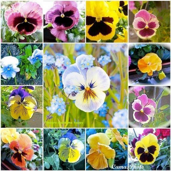 jardineria y ecologia