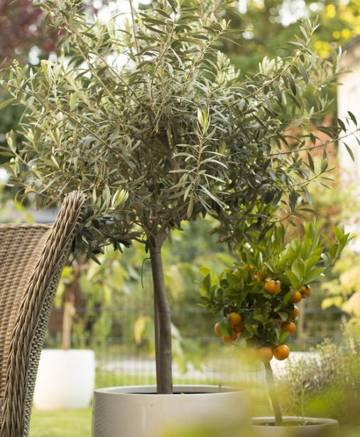 Quel terreau pour quelle plante | Terrarium pour plantes grasses, Déco jardin et Jardinage